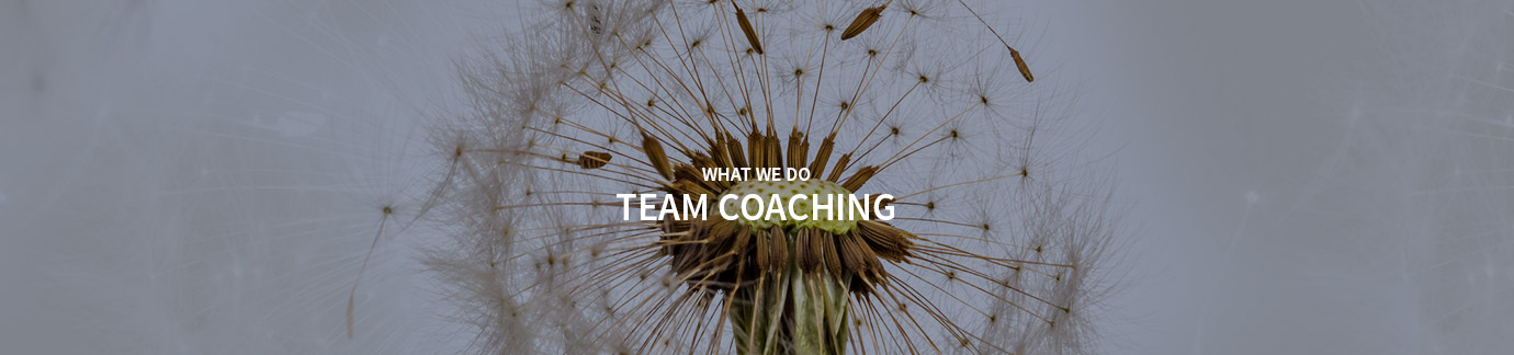 Team Coaching